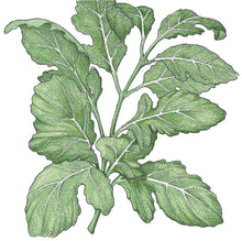 Load image into Gallery viewer, Organic Greens, Arugula