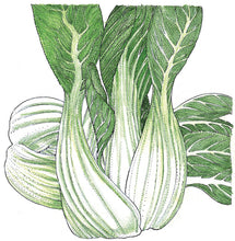 Load image into Gallery viewer, Organic Greens, Pak Choi