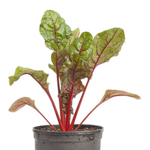 Load image into Gallery viewer, Organic Chard, Red Ruby (1/4 lb)