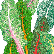 Load image into Gallery viewer, Organic Chard, Five Color Silverbeet