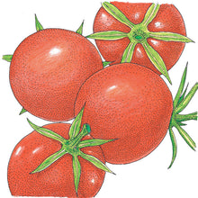 Load image into Gallery viewer, Organic Tomato, Burbank