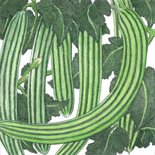 Load image into Gallery viewer, Organic Cucumber, Striped