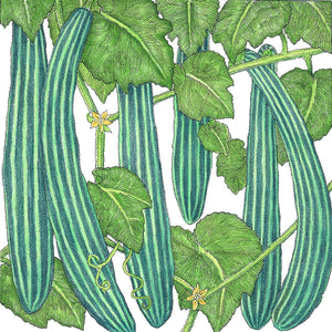 Organic Cucumber, Suyo Long