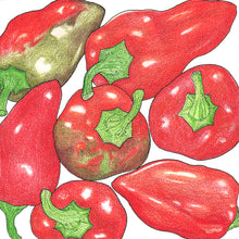 Load image into Gallery viewer, Organic Pepper, Sweet Pimiento