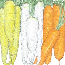 Load image into Gallery viewer, Organic Carrot, Culinary Mix