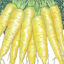 Load image into Gallery viewer, Organic Carrot, Solar Yellow