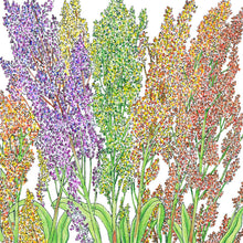 Load image into Gallery viewer, Organic Sorghum, Broomcorn