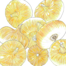 Load image into Gallery viewer, Organic Onion, Yellow Cippolini