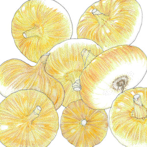 Organic Onion, Yellow Cippolini