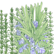 Load image into Gallery viewer, Organic Rosemary