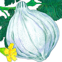 Load image into Gallery viewer, Organic Squash, Winter Blue Hubbard