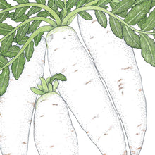 Load image into Gallery viewer, Organic Radish, Daikon