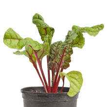 Load image into Gallery viewer, Organic Chard, Cardinal (Red)