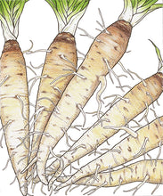 Load image into Gallery viewer, Organic Salsify, Fiore Blu