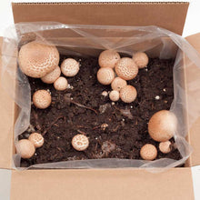 Load image into Gallery viewer, Portabella Mushroom Kit