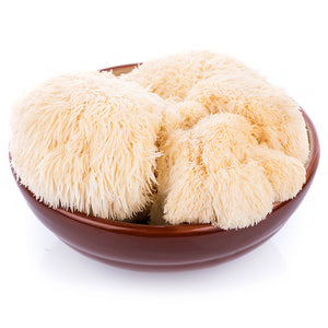 Lion's Mane Mushroom Plug Spawn (100 Plugs/pk)-mature