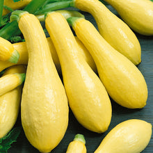 Load image into Gallery viewer, Organic Squash, Summer Early Straightneck (1/4 lb)