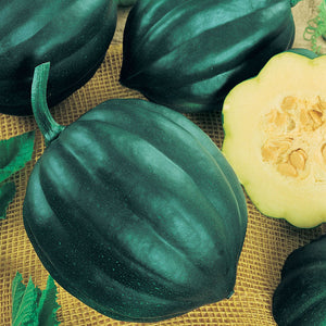Organic Squash, Winter Table Queen Acorn (1/4 lb)