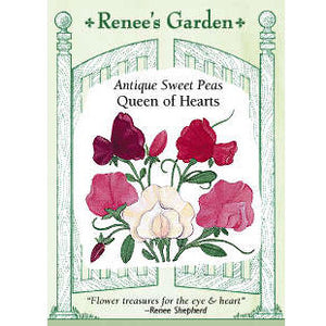 Renee's Garden Sweet Pea, Antique Queen of Hearts