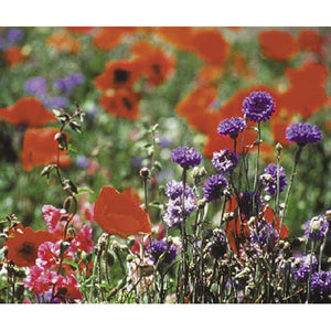 North American Shade Wildflower Mix (Lb)