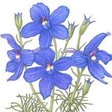 Load image into Gallery viewer, Larkspur Mix