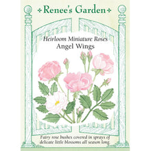 Load image into Gallery viewer, Renee's Garden Rose Miniature Angel Wings