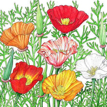 Load image into Gallery viewer, California Poppy, Mission Bells