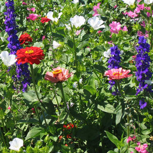 Hummingbird Garden Wildflower Mix (1/4 lb)