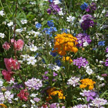 Load image into Gallery viewer, North American Shade Wildflower Mix (Lb)