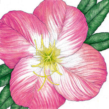 Load image into Gallery viewer, Evening Primrose, Showy (pack)