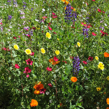 Load image into Gallery viewer, California Native Wildflower Mix (pack)