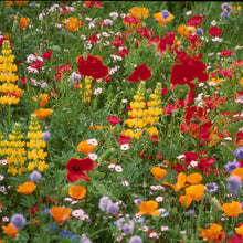 Load image into Gallery viewer, Northwest Wildflower Mix (1/4 lb)