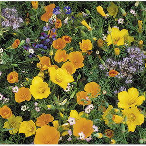 Southwest Wildflower Mix (Pack)