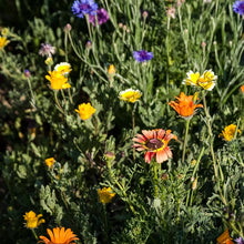 Load image into Gallery viewer, Mediterranean Dryland Wildflower Mix (pack)