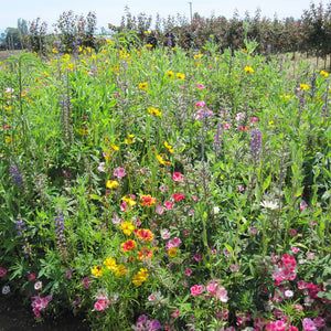 Clay Soil Loving Native Wildflower Mix (1/4 lb)