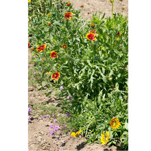 Load image into Gallery viewer, California Perennial Wildflower Mix (pack)