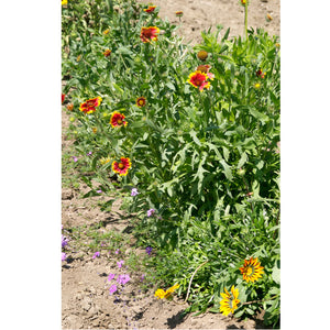 California Perennial Wildflower Mix (pack)