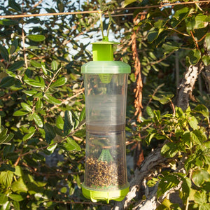 Reusable W-H-Y Trap with Attractant