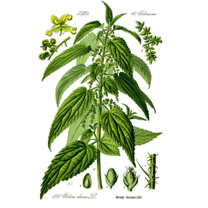 Strictly Medicinal Organic Stinging Nettles