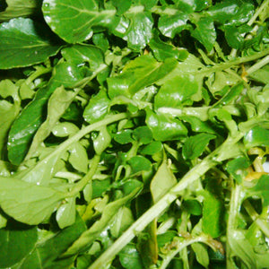 Organic Greens, Watercress