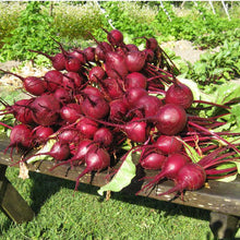 Load image into Gallery viewer, Organic Beet, Early Wonder Tall (1/4 lb)