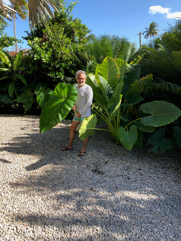 Carlos Mota planting in his backyard in the Dominican Republic.
