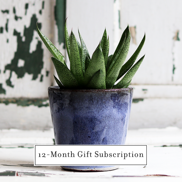 Micro Plant (12 - Month Gift Subscription)