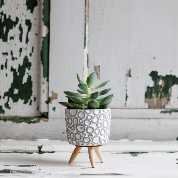 Concrete pot with wooden legs