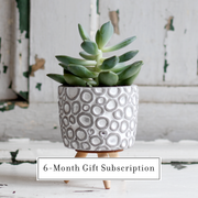 Micro Plant (6 - Month Gift Subscription)