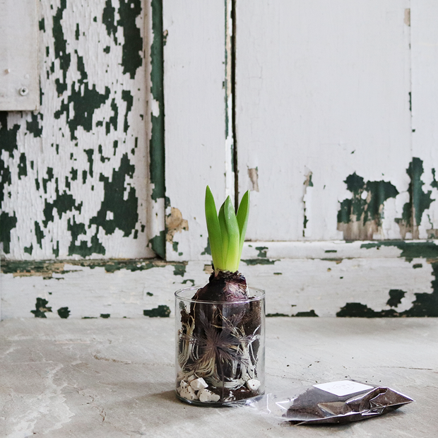 Grow Me: Gift Box Of Scented Hyacinth Bulb And Vase