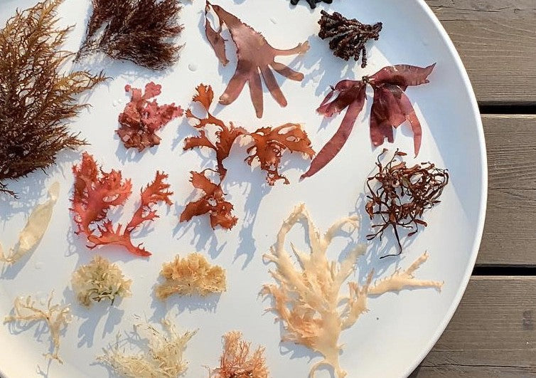 Seven Amazing & Eco Friendly Uses of Seaweed – Good for you and the planet!