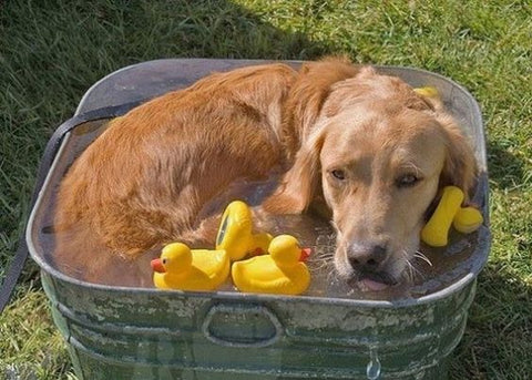 Rubber Ducky Dog