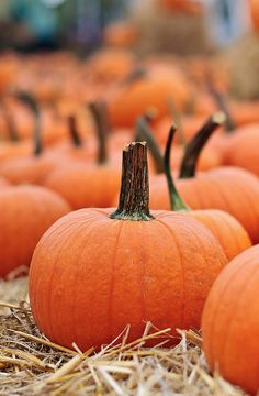 Compost your Pumpkin or Eat it!
