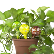 Load image into Gallery viewer, Aqua Watering Globes Mini Plant Watering Glass Bulbs - Watering Globe Kit 3 Pack